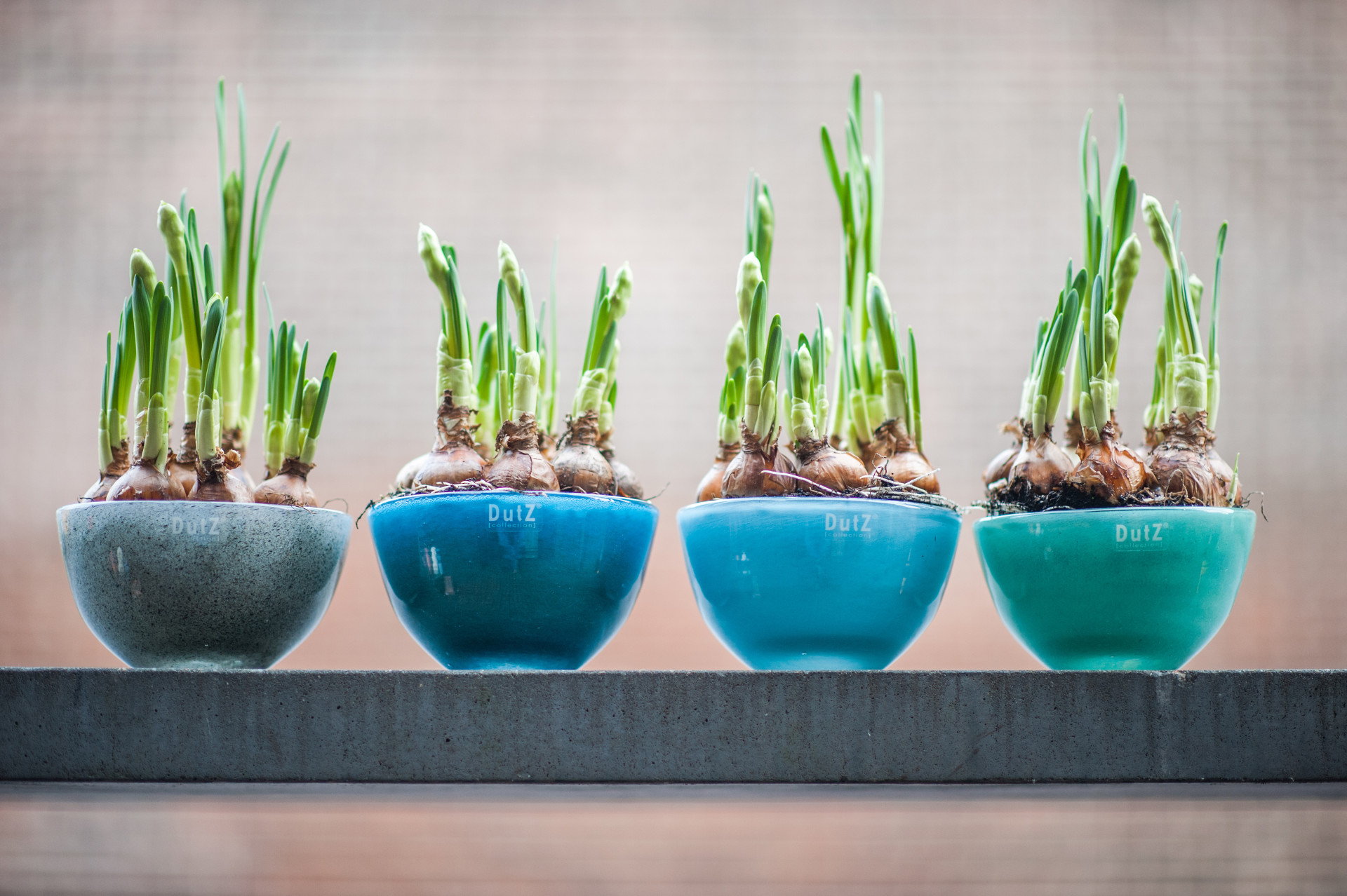 dutz glas collection kaufen bei home garden hannover home garden. Black Bedroom Furniture Sets. Home Design Ideas